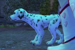 Cachorrinho-Malhado-WesleyHP-3