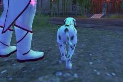 Cachorrinho Malhado - WesleyHP (4)