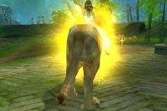 Leão-Dourado-WesleyHP-4