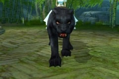 Leopardo-da-Tempestade-WesleyHP-2