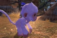 Macaco-da-Neve-Bebê-WesleyHP-1