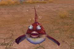 Peixe-bolha-Bebê-WesleyHP-2
