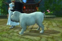 Sr.-Bulldog-WesleyHP-3