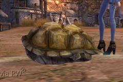 Tartaruga-Inspirada-WesleyHP-3