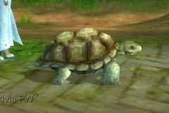 Tartaruga-WesleyHP-1
