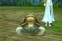 Tartaruga-WesleyHP-2