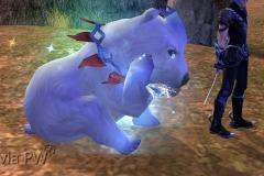 Urso-Polar-WesleyHP-1