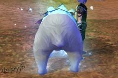 Urso-Polar-WesleyHP-4